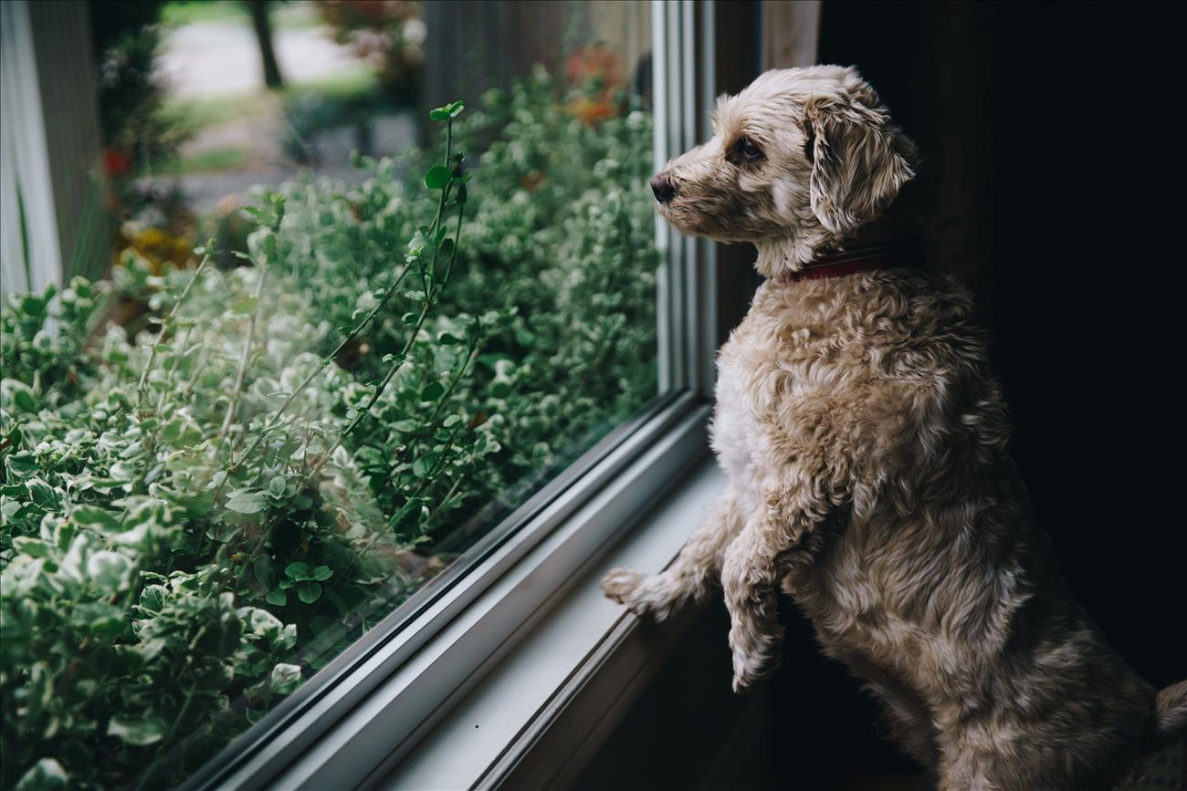 cute dog looks out window